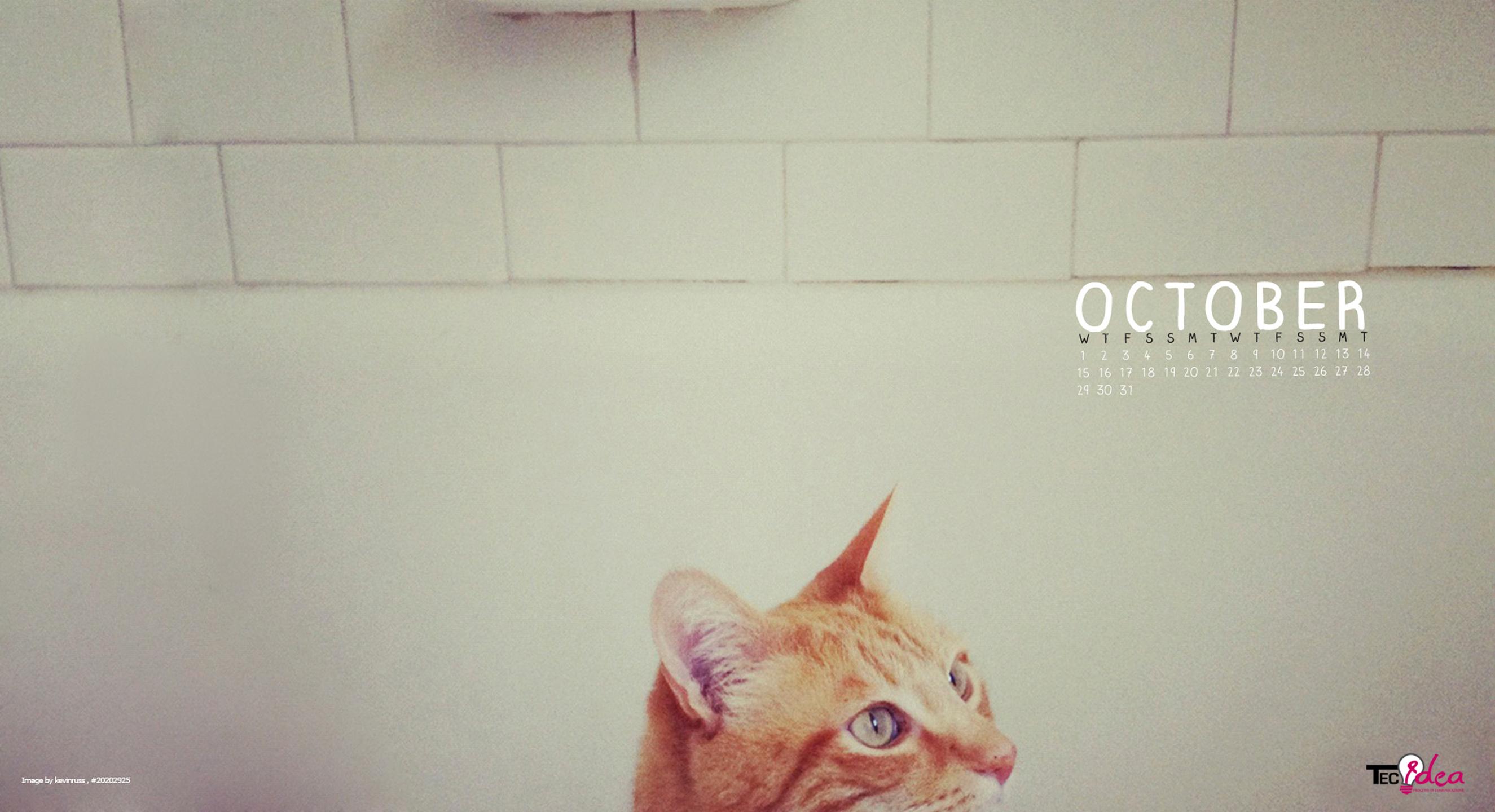 Ottobre 2014 - La curiosità del gatto
