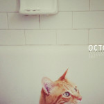 """Sfondo """"La curiosità del gatto"""" - 1920 x 1200 px"""