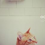 """Sfondo """"La curiosità del gatto"""" - 2560x1440 px"""