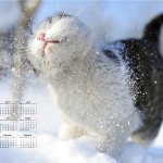 Gatto e neve wallpaper